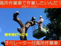 画像1: オペレーター付高所作業車 樹木の枝打ち 9.9Mスカイマスター