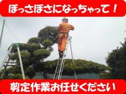 画像1: 植木・松の剪定作業