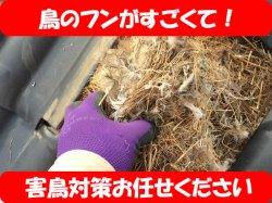 画像1: 鳥の巣駆除 害鳥対策